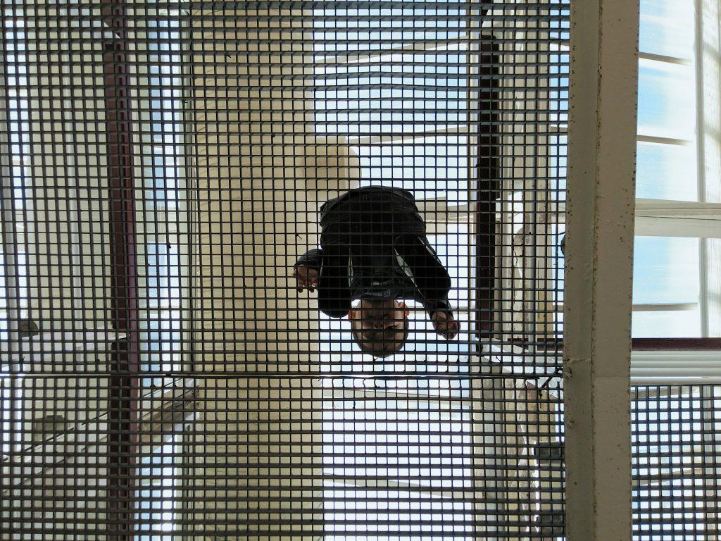 Planes con niños. Palacio de Cristal. Vista desde abajo